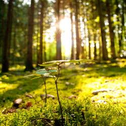 Bilden föreställer solen som skiner in i en skog