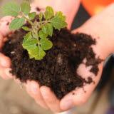 Bilden föreställer en planta med jord i en hand