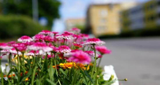 Blommor Sörberge.JPG
