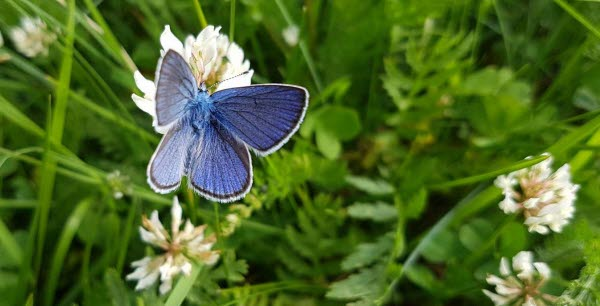 Bilden visar en fjäril på en blomma