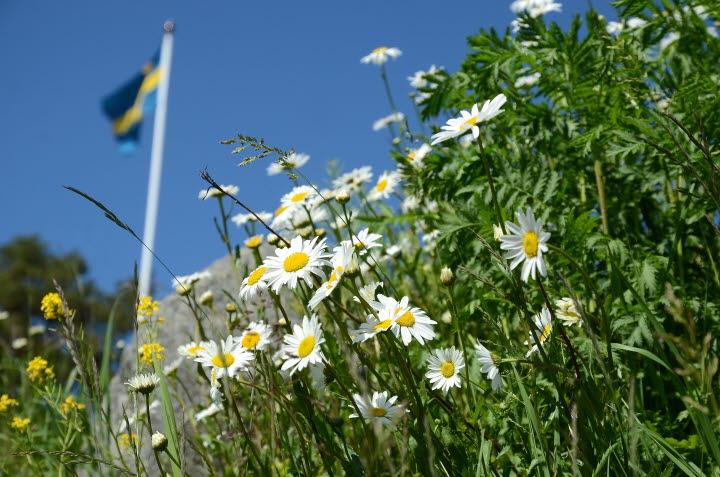 Sveriges flagga med blå bakgrund och gult kors.