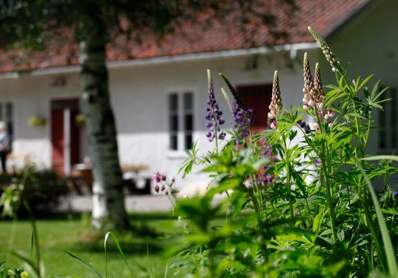Bilden föreställer ett vid hus på Lögdö Bruk med blommor i förgrunden