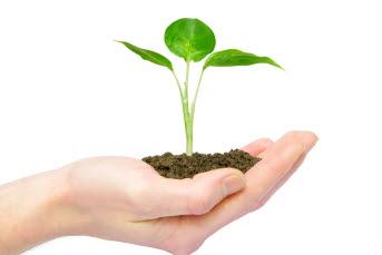 Bilden föreställer en hand som håller i en grön planta