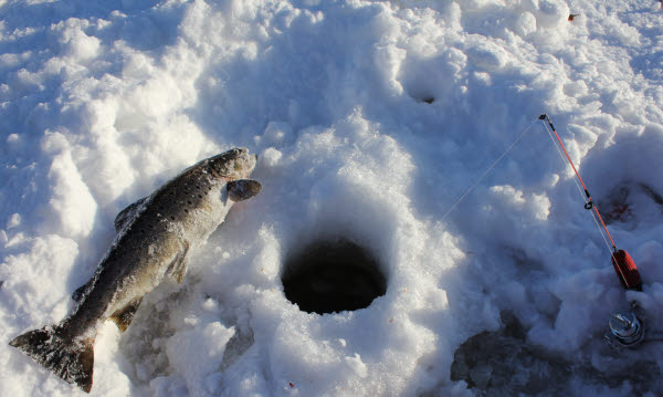 Bilden föreställer en röding och ett pimpelspö som ligger på snön vid ett borrat ishål