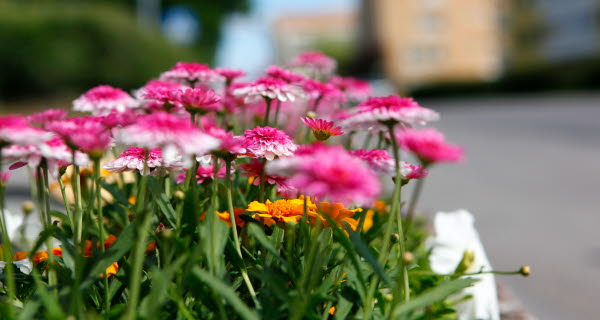 Bilden visar blommor i en gatumiljö