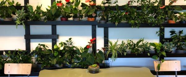 Hundratals växter pryder väggarna i Timrå gymnasiums gröna klassrum