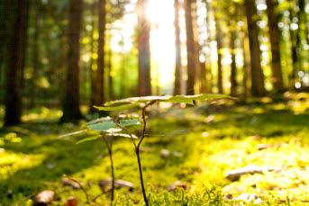 Bilden föreställer en skogsdunge där solen tränger sig igenom.