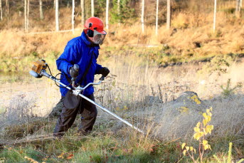 Bildne föreställer en person slår gräs