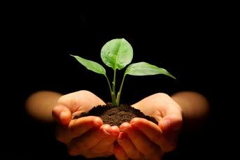 Bilden föreställer en hand som håller i en grön växt