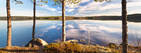Bilden föreställer vatten och träd