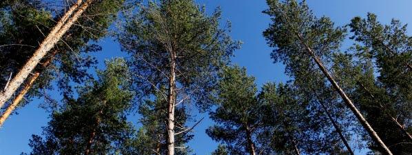 Bilden föreställer en skog