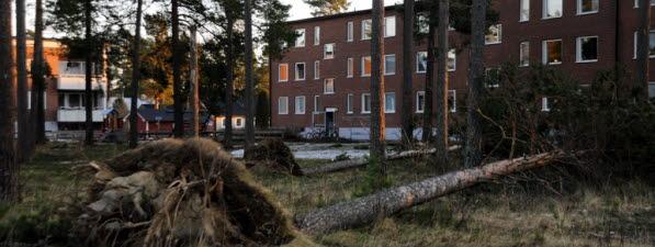 Bilden föreställer nedblåsta träd i ett bostadsområde.