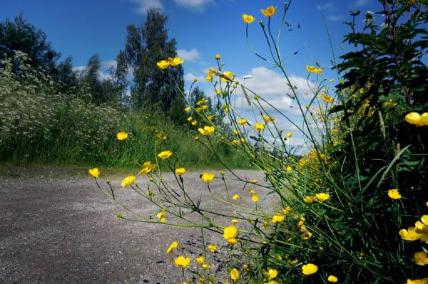 Bilden föreställer en landsväg på sommaren