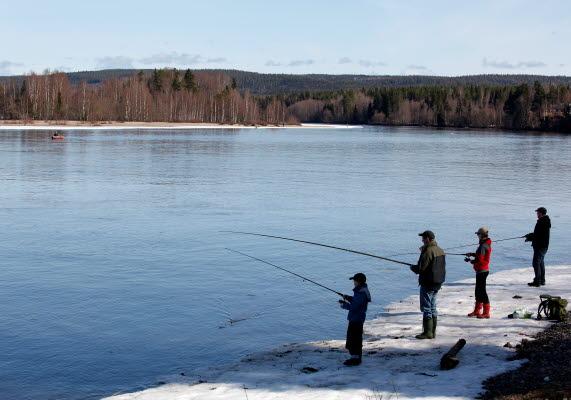 Bilden föreställer fyra personer som står och fiskar vid ett vattendrag