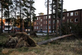 Bilden föreställer fällda träd i ett bostadsområde i Timrå.