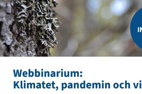 Bilden föreställer en bild på lav på en trädstam